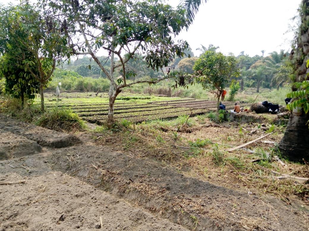 Projet de ferme agroécologique à Linzolo,...