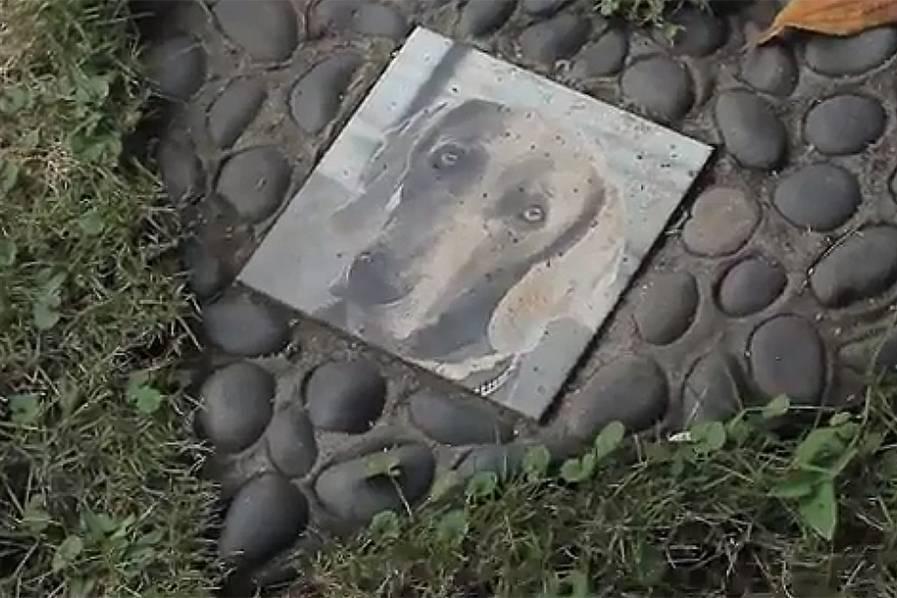 Imagen Video: cementerio de mascotas de Cali, un lugar para despedir a esos amigos inolvidables