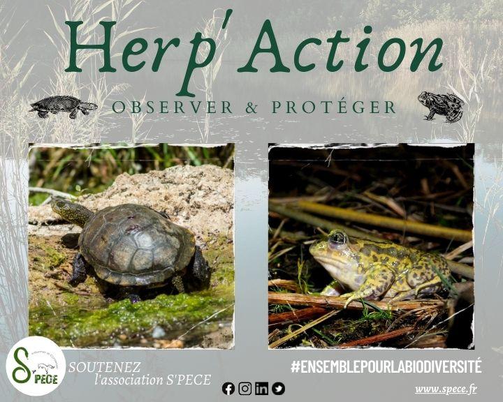 Herp'Action : tortues et crapauds, des...